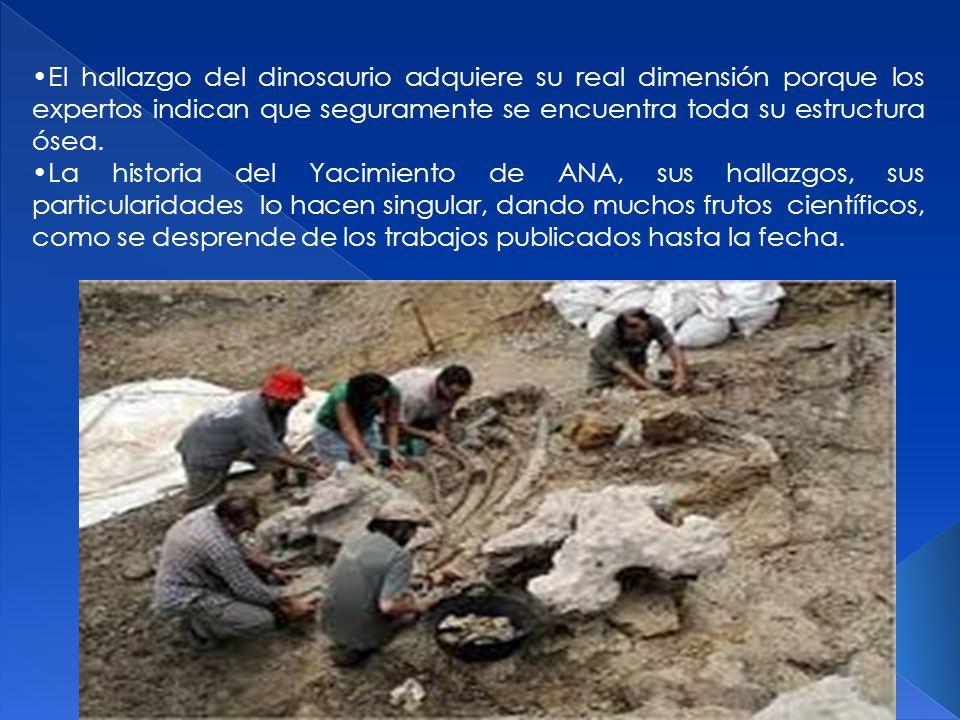 El hallazgo del dinosaurio adquiere su real dimensión porque los expertos indican que seguramente se encuentra toda su estructura ósea. La historia de