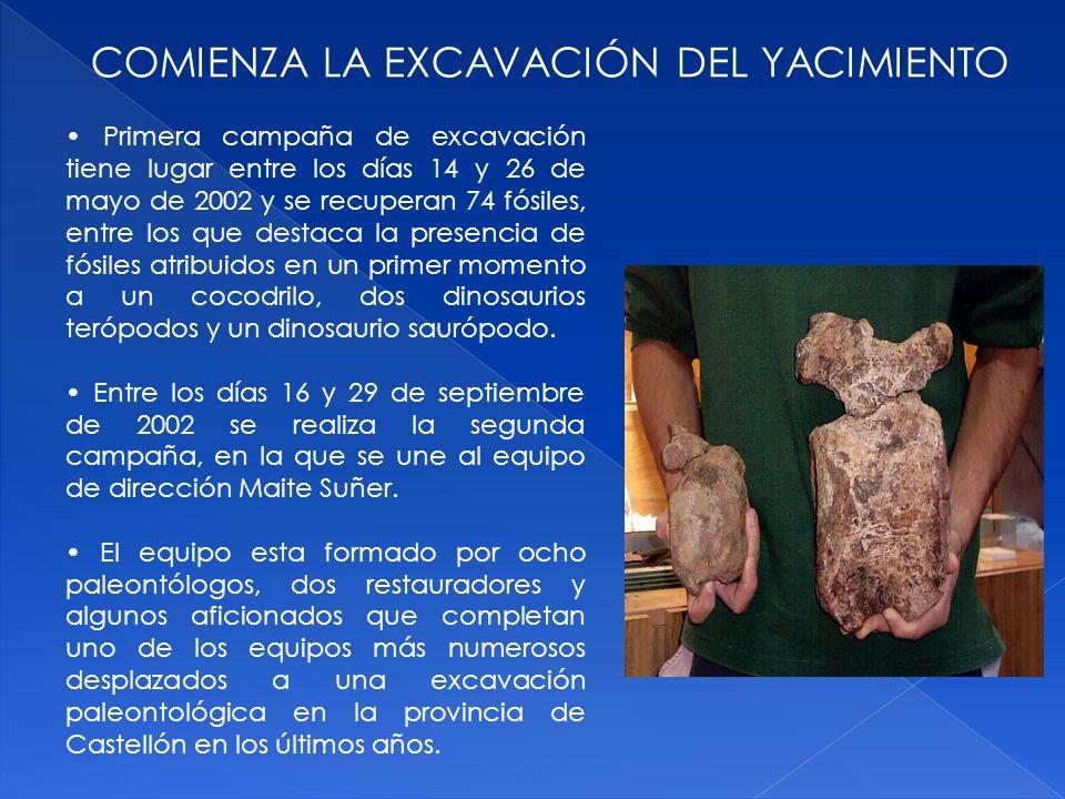 COMIENZA LA EXCAVACIÓN DEL YACIMIENTO Primera campaña de excavación tiene lugar entre los días 14 y 26 de mayo de 2002 y se recuperan 74 fósiles, entr