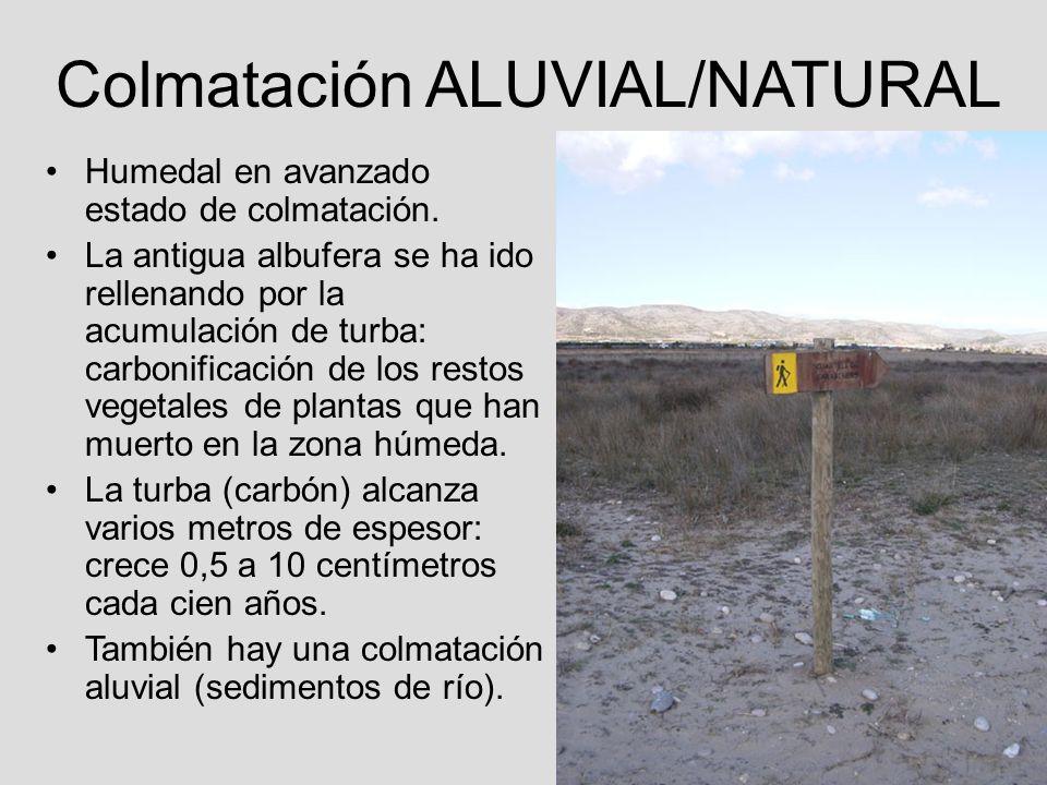 Colmatación ALUVIAL/NATURAL Humedal en avanzado estado de colmatación. La antigua albufera se ha ido rellenando por la acumulación de turba: carbonifi