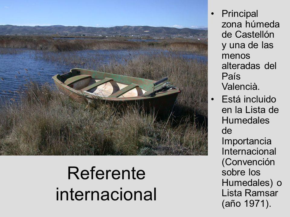 Referente internacional Principal zona húmeda de Castellón y una de las menos alteradas del País Valencià. Está incluido en la Lista de Humedales de I