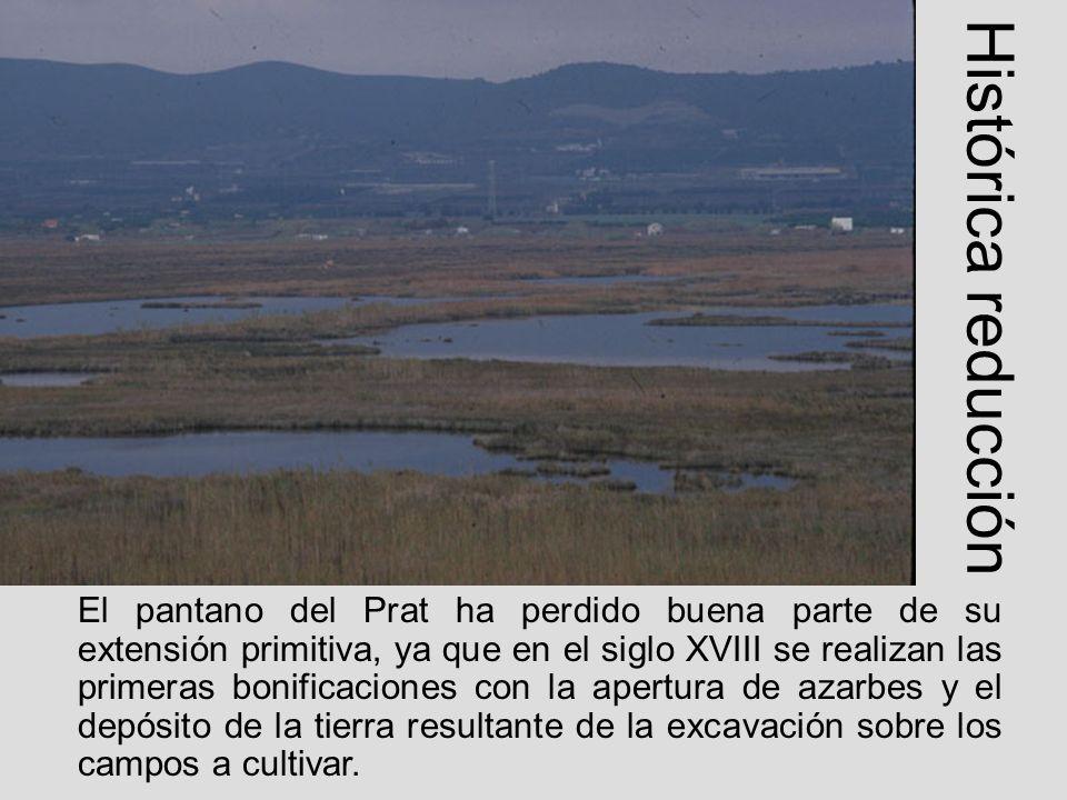 Histórica reducción El pantano del Prat ha perdido buena parte de su extensión primitiva, ya que en el siglo XVIII se realizan las primeras bonificaci