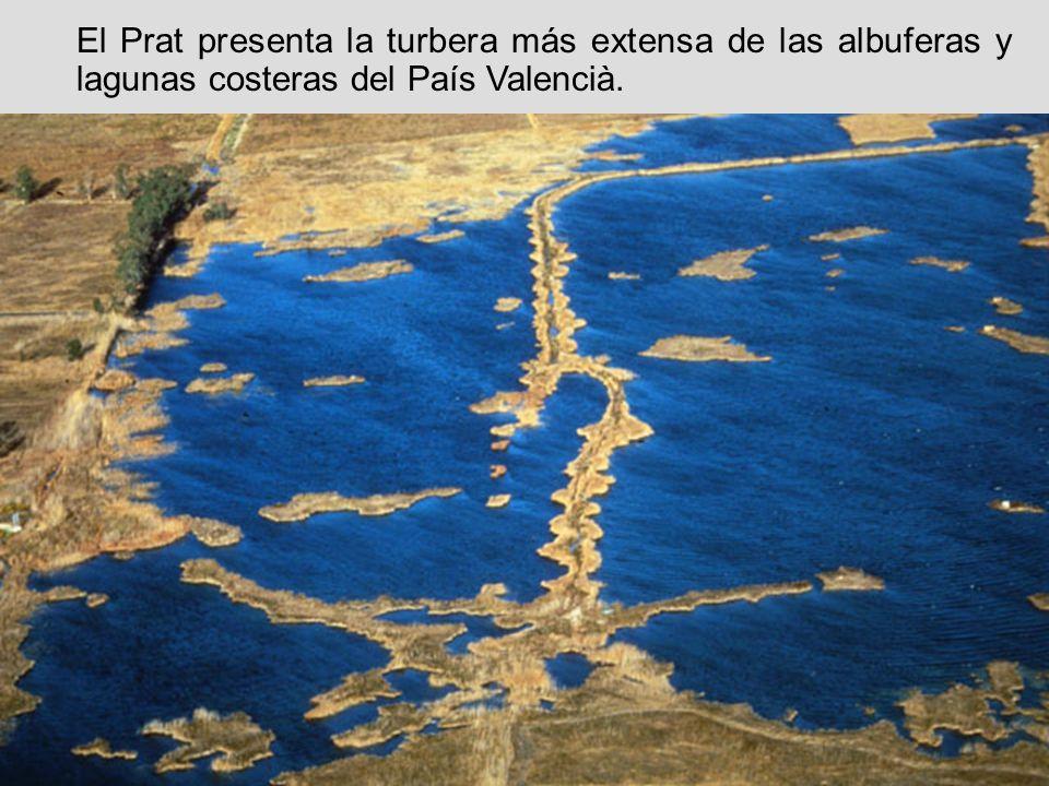 El Prat presenta la turbera más extensa de las albuferas y lagunas costeras del País Valencià.