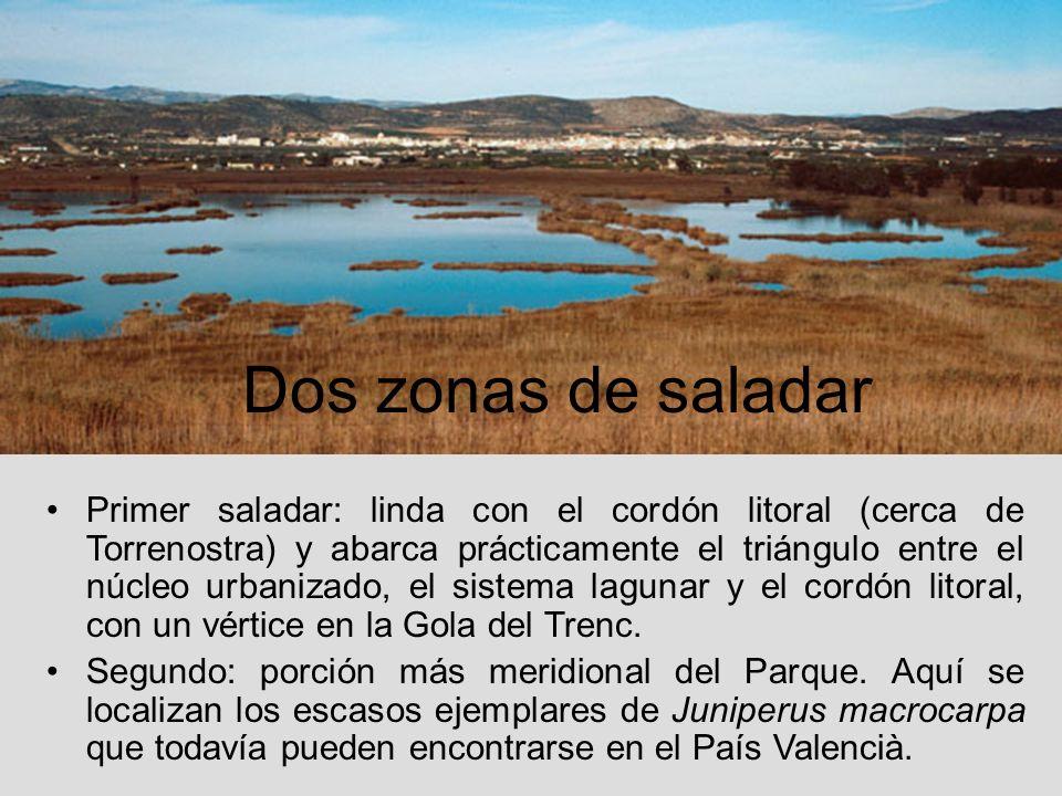 Primer saladar: linda con el cordón litoral (cerca de Torrenostra) y abarca prácticamente el triángulo entre el núcleo urbanizado, el sistema lagunar