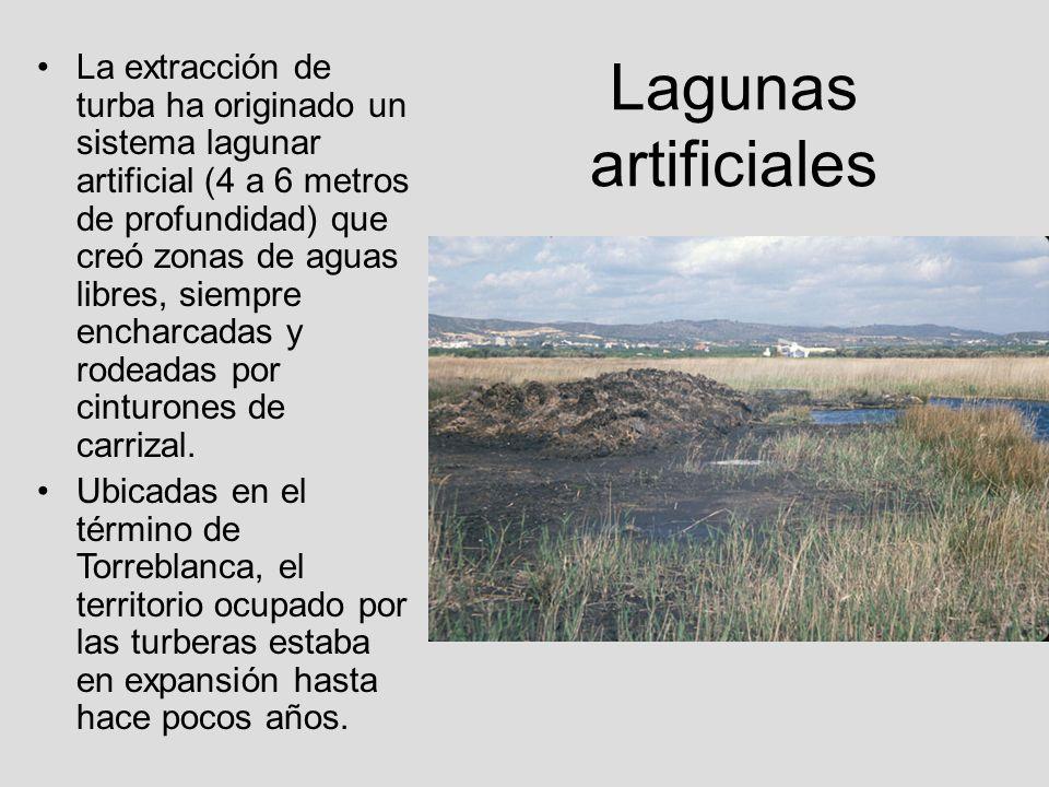 Lagunas artificiales La extracción de turba ha originado un sistema lagunar artificial (4 a 6 metros de profundidad) que creó zonas de aguas libres, s