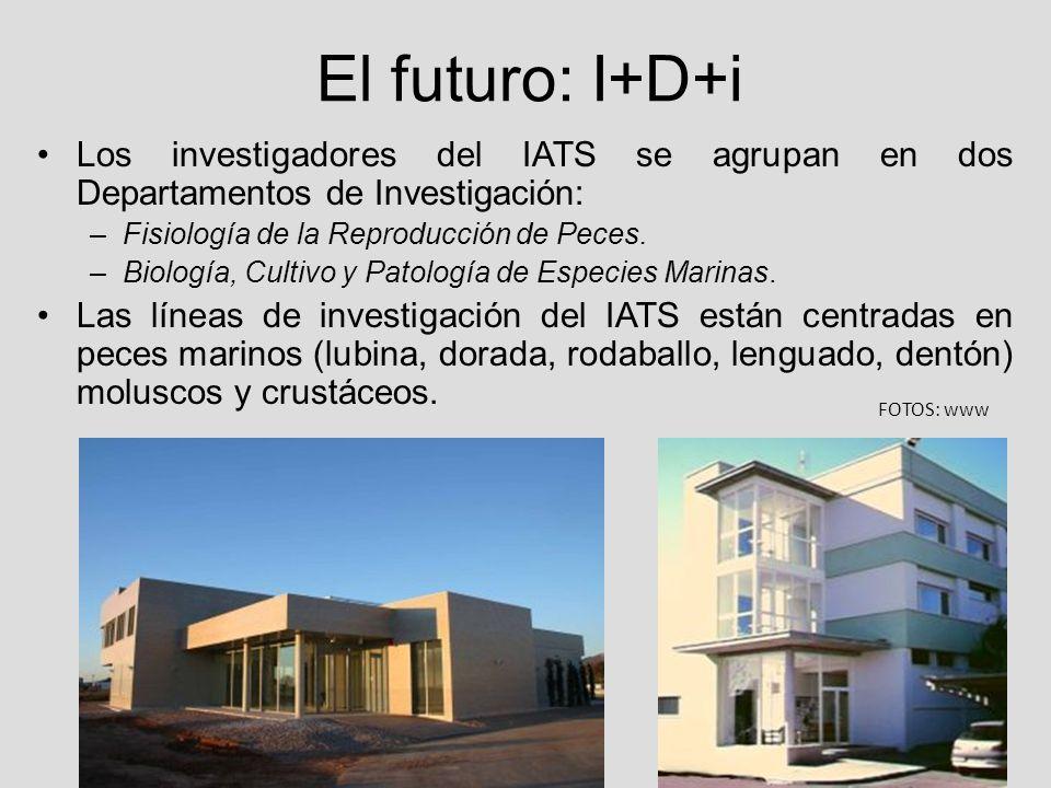 El futuro: I+D+i Los investigadores del IATS se agrupan en dos Departamentos de Investigación: –Fisiología de la Reproducción de Peces. –Biología, Cul