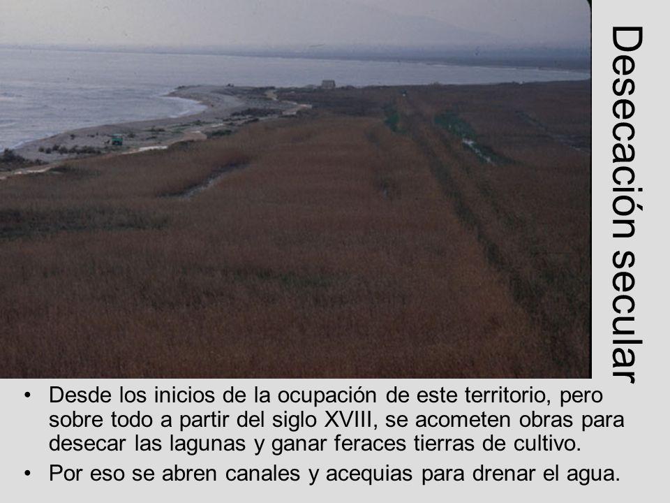 De qué vamos a hablar Origen geológico Humedal de referencia Histórica reducción Una vegetación específica Una fauna específica Aprovechamiento económico singular