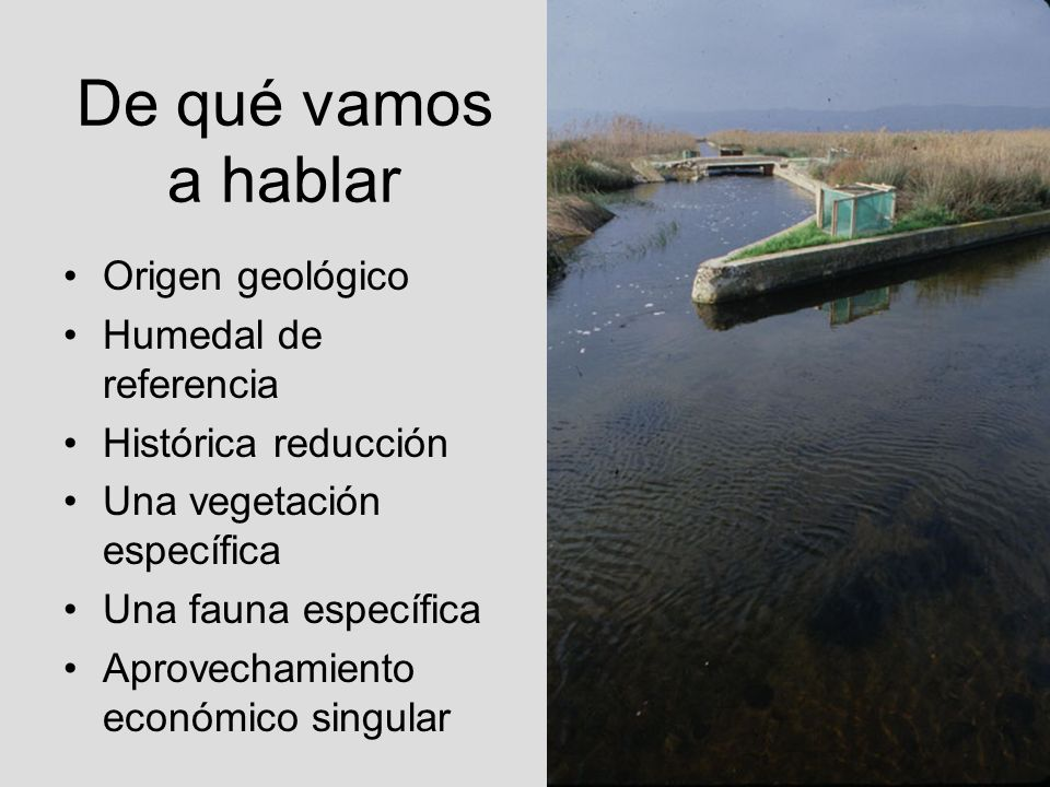 De qué vamos a hablar Origen geológico Humedal de referencia Histórica reducción Una vegetación específica Una fauna específica Aprovechamiento económ