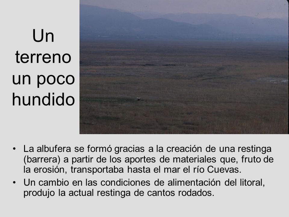 Galápago europeo Destaca la presencia del galápago europeo (Emys orbicularis), especie en grave regresión en la zona litoral debido a la degradación de la calidad del agua y por la aparición de especies exóticas.