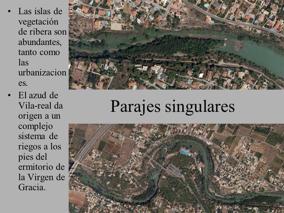Parajes singulares Las islas de vegetación de ribera son abundantes, tanto como las urbanizacion es. El azud de Vila-real da origen a un complejo sist