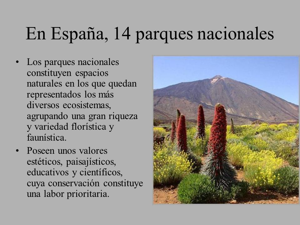 En España, 14 parques nacionales Los parques nacionales constituyen espacios naturales en los que quedan representados los más diversos ecosistemas, a