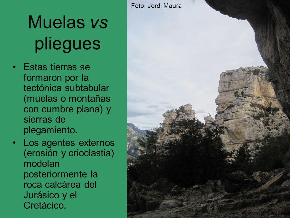 Muelas vs pliegues Estas tierras se formaron por la tectónica subtabular (muelas o montañas con cumbre plana) y sierras de plegamiento. Los agentes ex