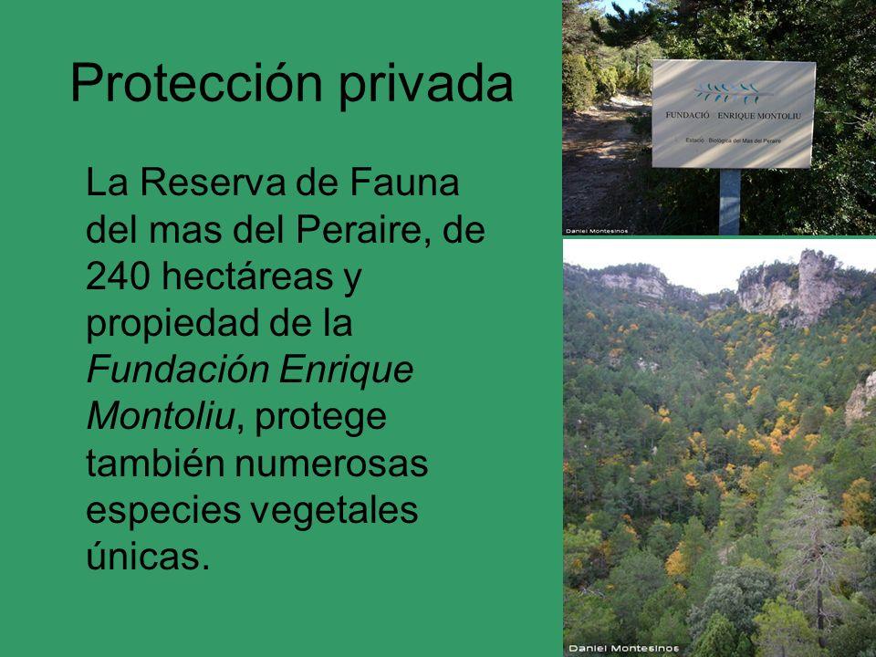 Protección privada La Reserva de Fauna del mas del Peraire, de 240 hectáreas y propiedad de la Fundación Enrique Montoliu, protege también numerosas e