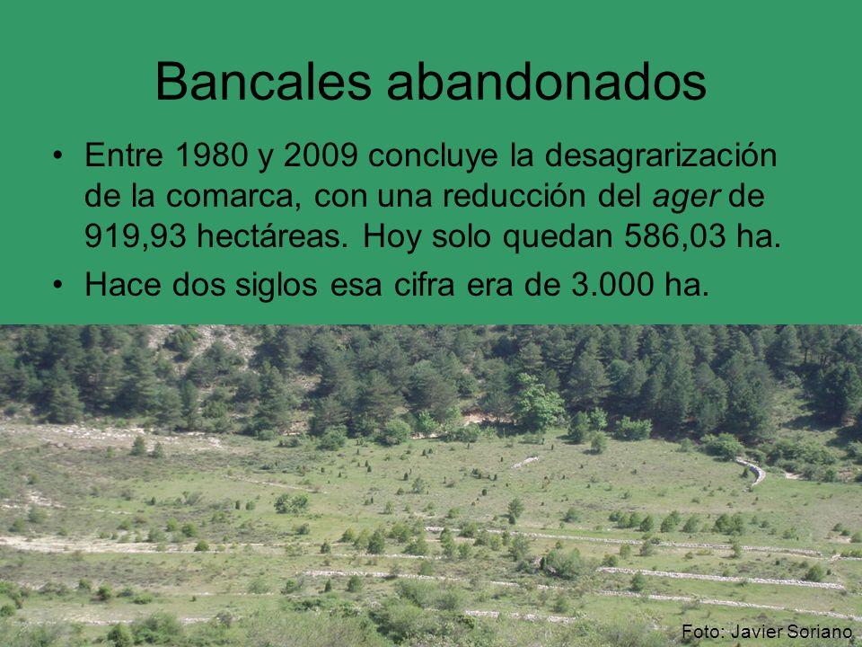 Bancales abandonados Entre 1980 y 2009 concluye la desagrarización de la comarca, con una reducción del ager de 919,93 hectáreas. Hoy solo quedan 586,