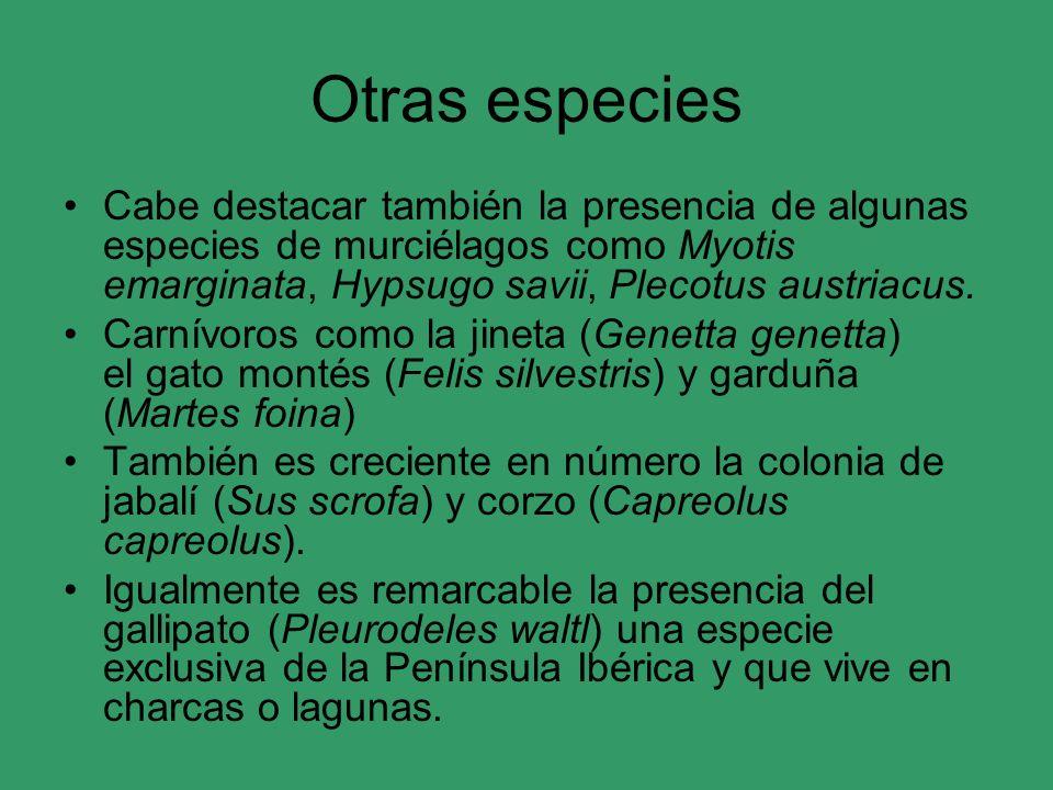 Otras especies Cabe destacar también la presencia de algunas especies de murciélagos como Myotis emarginata, Hypsugo savii, Plecotus austriacus. Carní