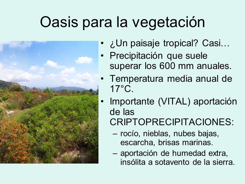 Oasis para la vegetación ¿Un paisaje tropical? Casi… Precipitación que suele superar los 600 mm anuales. Temperatura media anual de 17°C. Importante (