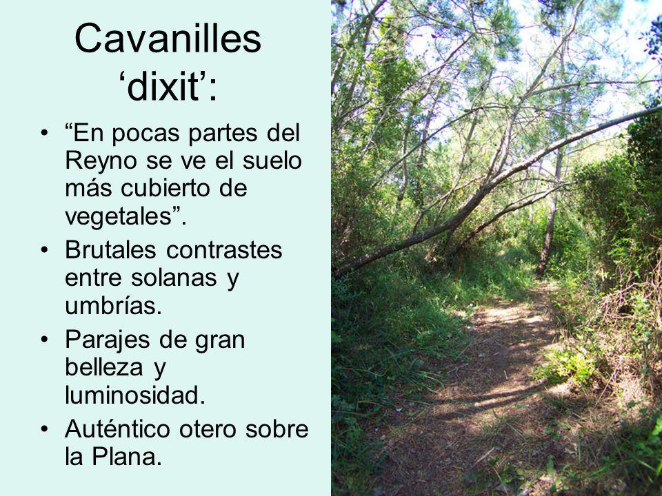 Cavanilles dixit: En pocas partes del Reyno se ve el suelo más cubierto de vegetales. Brutales contrastes entre solanas y umbrías. Parajes de gran bel