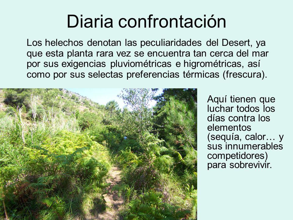 Diaria confrontación Los helechos denotan las peculiaridades del Desert, ya que esta planta rara vez se encuentra tan cerca del mar por sus exigencias