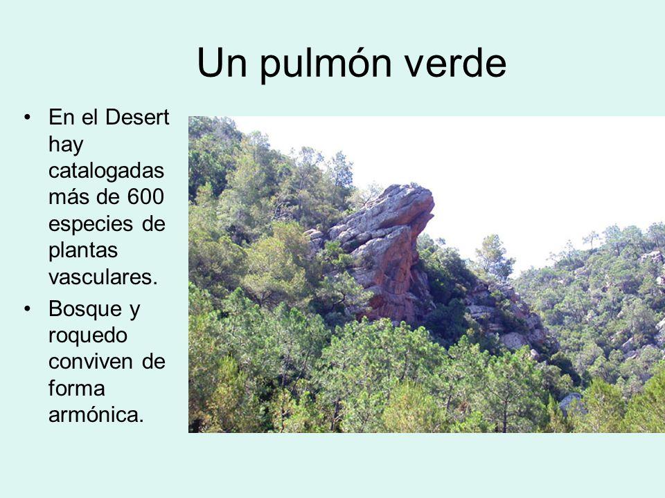 Un pulmón verde En el Desert hay catalogadas más de 600 especies de plantas vasculares. Bosque y roquedo conviven de forma armónica.