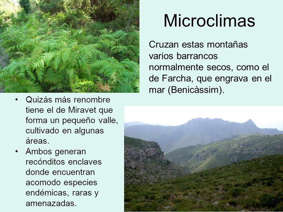 Microclimas Cruzan estas montañas varios barrancos normalmente secos, como el de Farcha, que engrava en el mar (Benicàssim). Quizás más renombre tiene