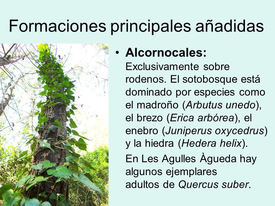 Formaciones principales añadidas Alcornocales: Exclusivamente sobre rodenos. El sotobosque está dominado por especies como el madroño (Arbutus unedo),