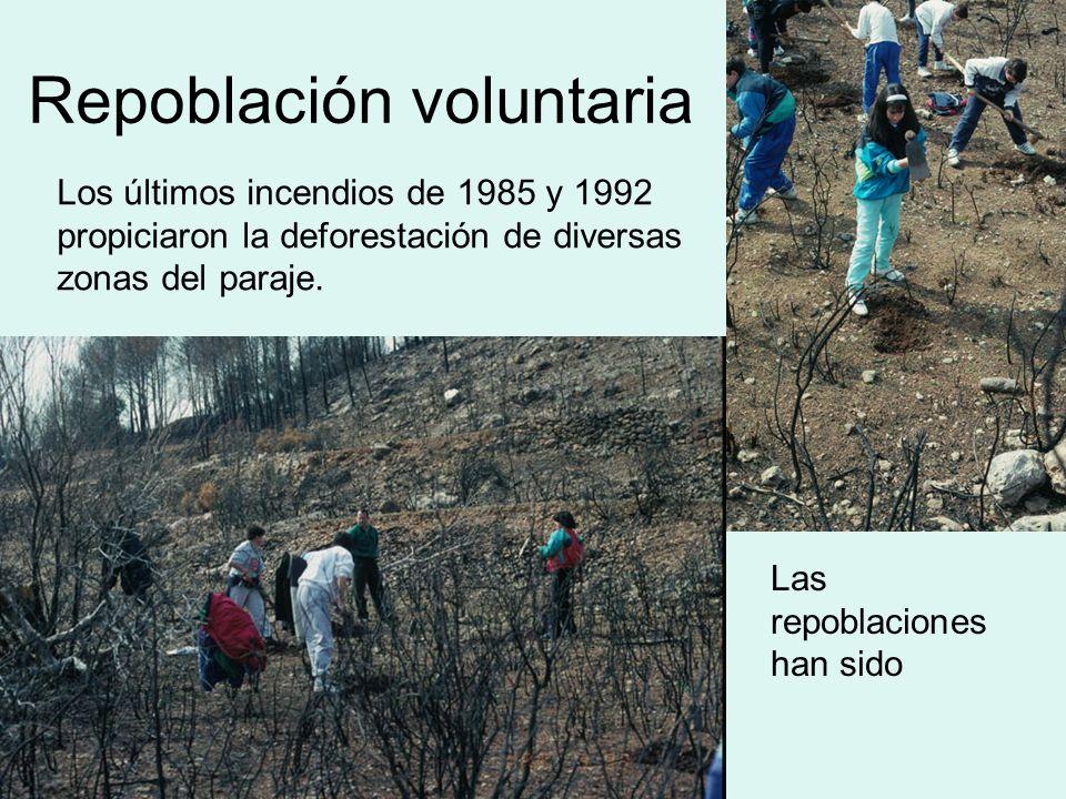 Repoblación voluntaria Los últimos incendios de 1985 y 1992 propiciaron la deforestación de diversas zonas del paraje. Las repoblaciones han sido