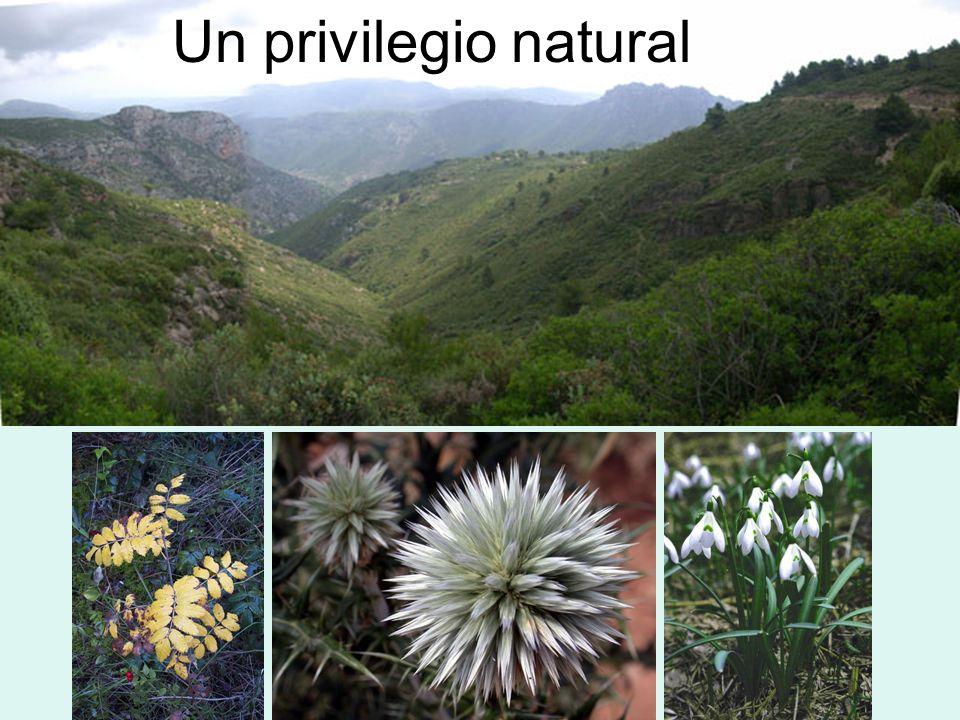 Un privilegio natural