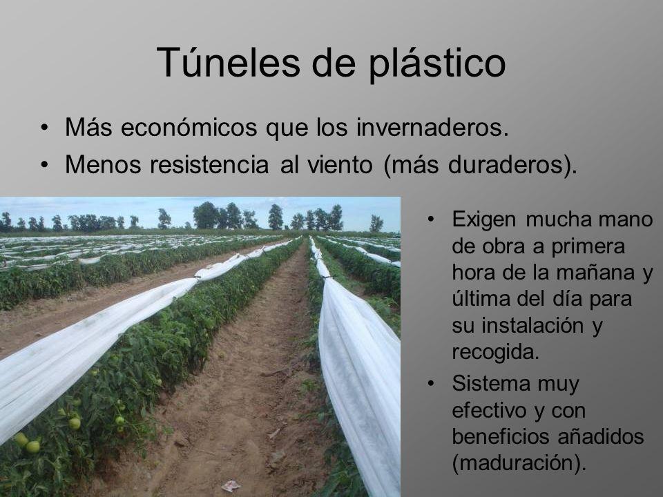 Túneles de plástico Más económicos que los invernaderos. Menos resistencia al viento (más duraderos). Exigen mucha mano de obra a primera hora de la m