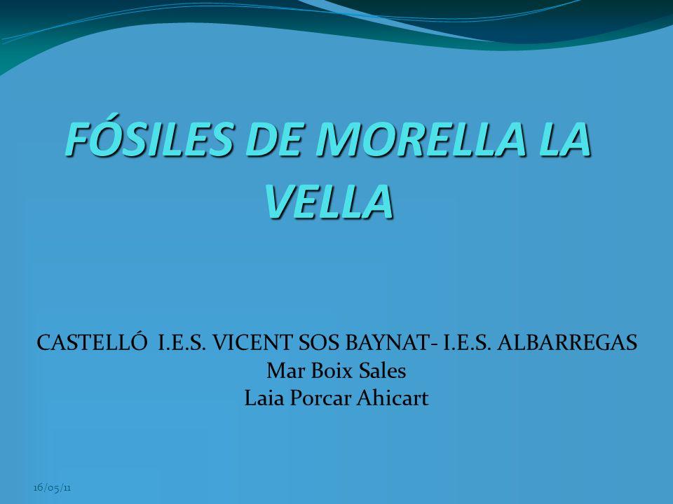 16/05/11 FÓSILES DE MORELLA LA VELLA CASTELLÓ I.E.S. VICENT SOS BAYNAT- I.E.S. ALBARREGAS Mar Boix Sales Laia Porcar Ahicart