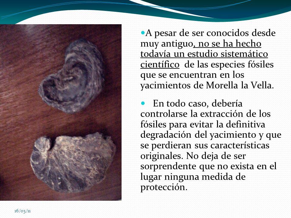 16/05/11 A pesar de ser conocidos desde muy antiguo, no se ha hecho todavía un estudio sistemático científico de las especies fósiles que se encuentra