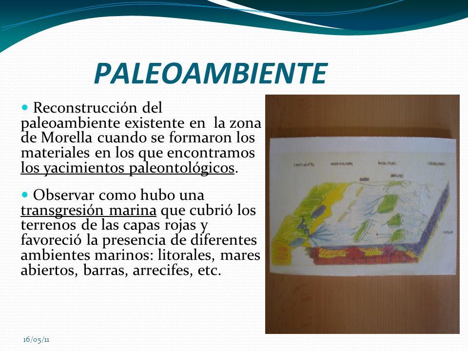 16/05/11 PALEOAMBIENTE Reconstrucción del paleoambiente existente en la zona de Morella cuando se formaron los materiales en los que encontramos los y
