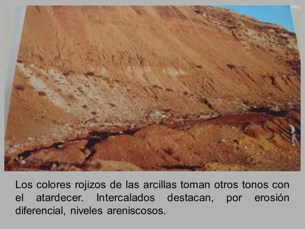 Los colores rojizos de las arcillas toman otros tonos con el atardecer. Intercalados destacan, por erosión diferencial, niveles areniscosos.