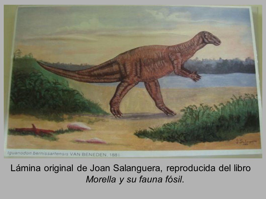 Lámina original de Joan Salanguera, reproducida del libro Morella y su fauna fósil.