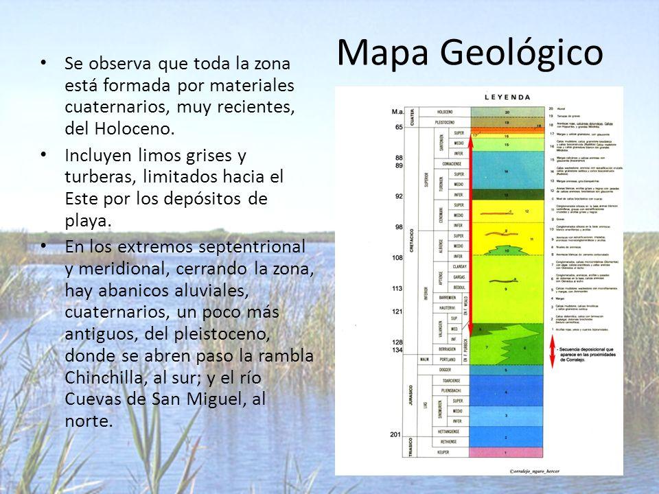 Mapa Geológico Se observa que toda la zona está formada por materiales cuaternarios, muy recientes, del Holoceno.