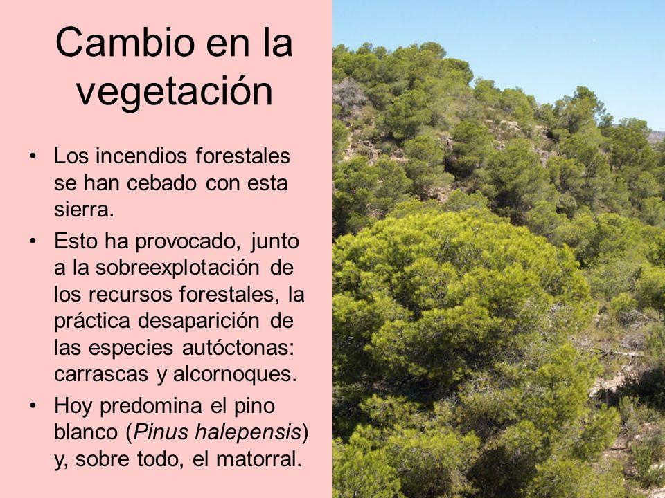Suelos ácidos Sobre los suelos silíceos, de carácter ácido, se han desarrollado modestos bosques de alcornoque y pino rodeno con un sotobosque característico: aladierno (Rhamnus alaternus), lentisco (Pistacia lentiscus), madroño (Arbutus unedo) y jaras (Cistus salvifolius, Cistus monspeliensis).