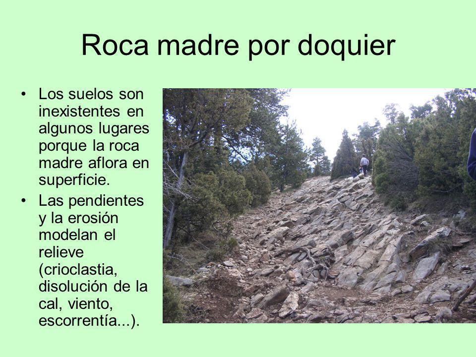 Roca madre por doquier Los suelos son inexistentes en algunos lugares porque la roca madre aflora en superficie. Las pendientes y la erosión modelan e