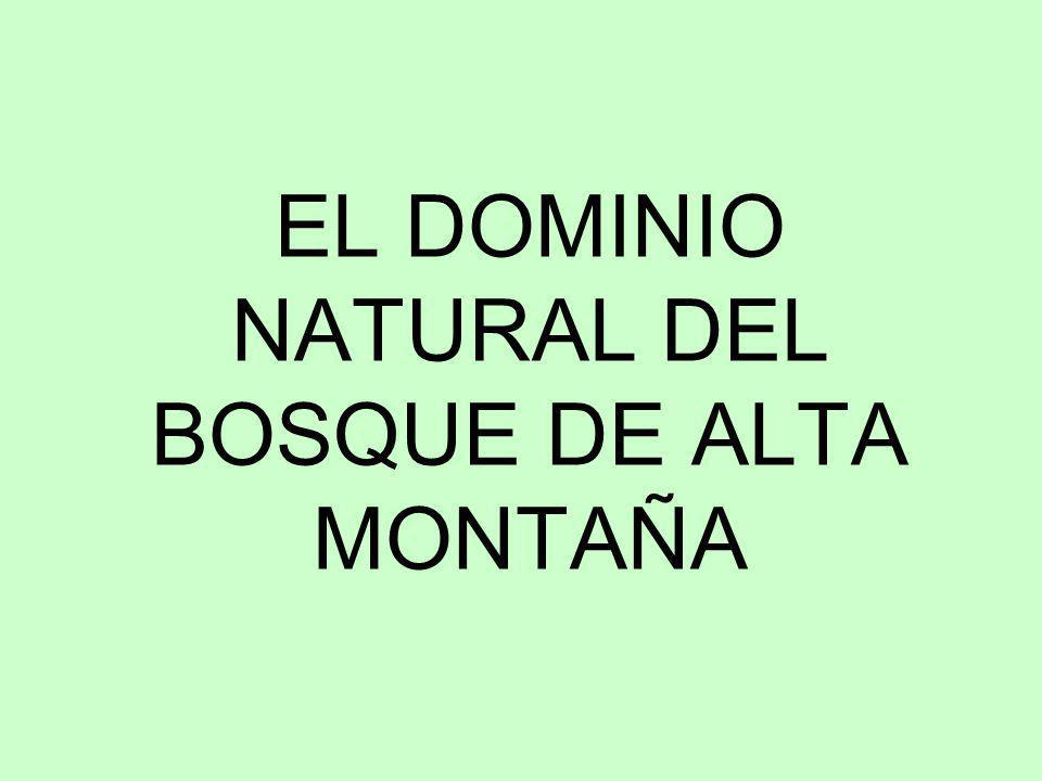 EL DOMINIO NATURAL DEL BOSQUE DE ALTA MONTAÑA
