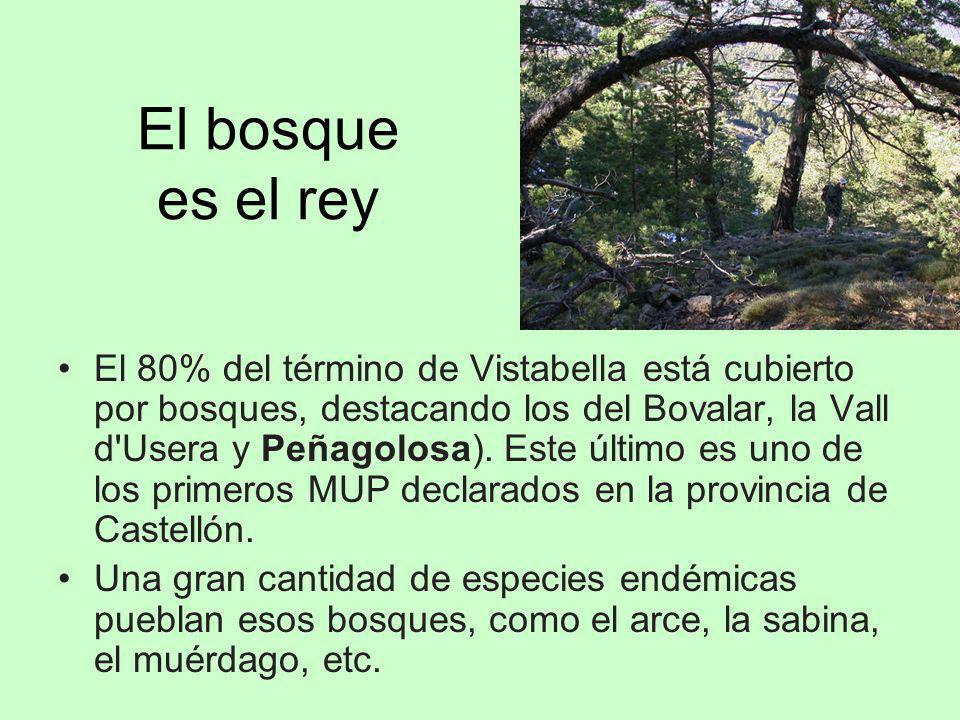El bosque es el rey El 80% del término de Vistabella está cubierto por bosques, destacando los del Bovalar, la Vall d'Usera y Peñagolosa). Este último