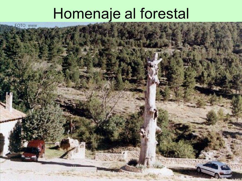 Homenaje al forestal FOTO: www