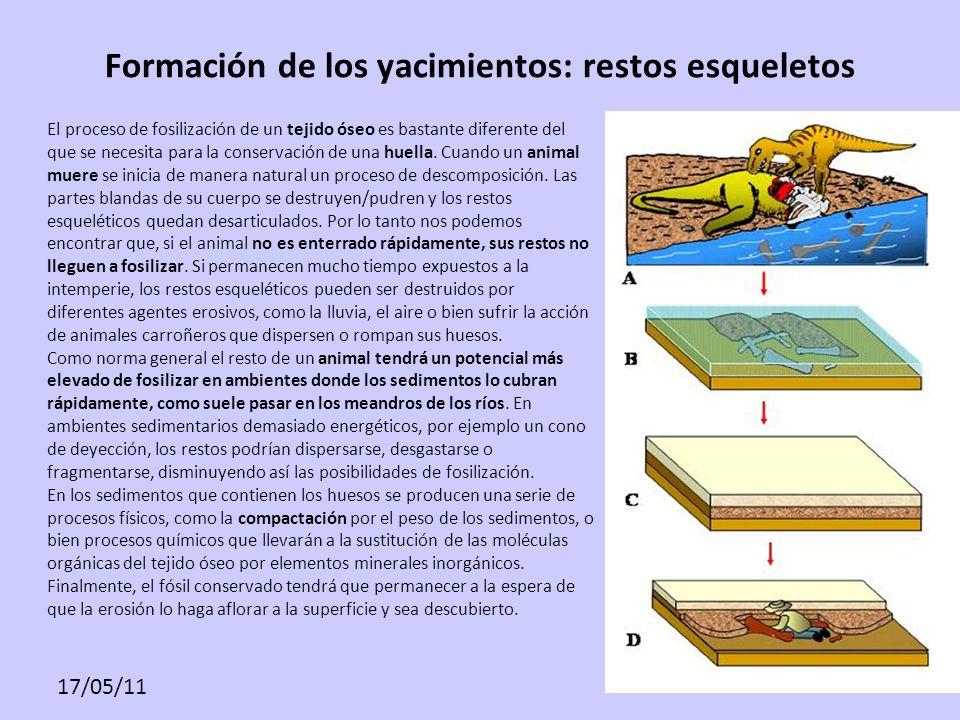 17/05/11 Formación de los yacimientos: restos esqueletos El proceso de fosilización de un tejido óseo es bastante diferente del que se necesita para l