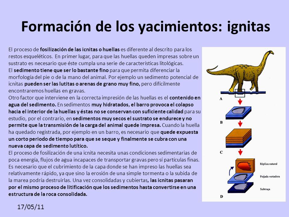 17/05/11 Formación de los yacimientos: ignitas El proceso de fosilización de las icnitas o huellas es diferente al descrito para los restos esquelétic
