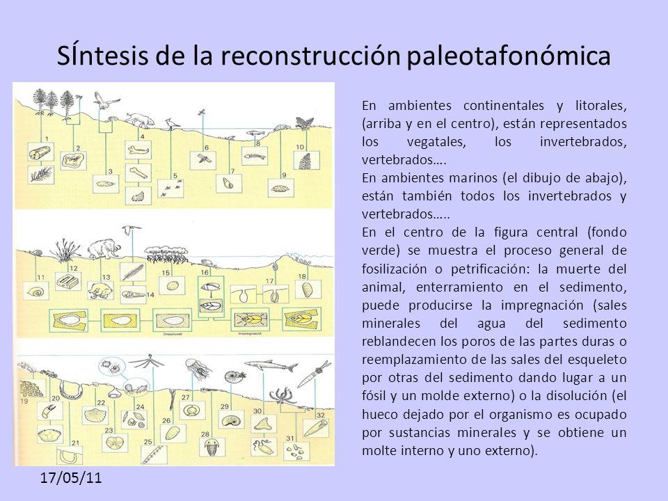 17/05/11 SÍntesis de la reconstrucción paleotafonómica En ambientes continentales y litorales, (arriba y en el centro), están representados los vegata