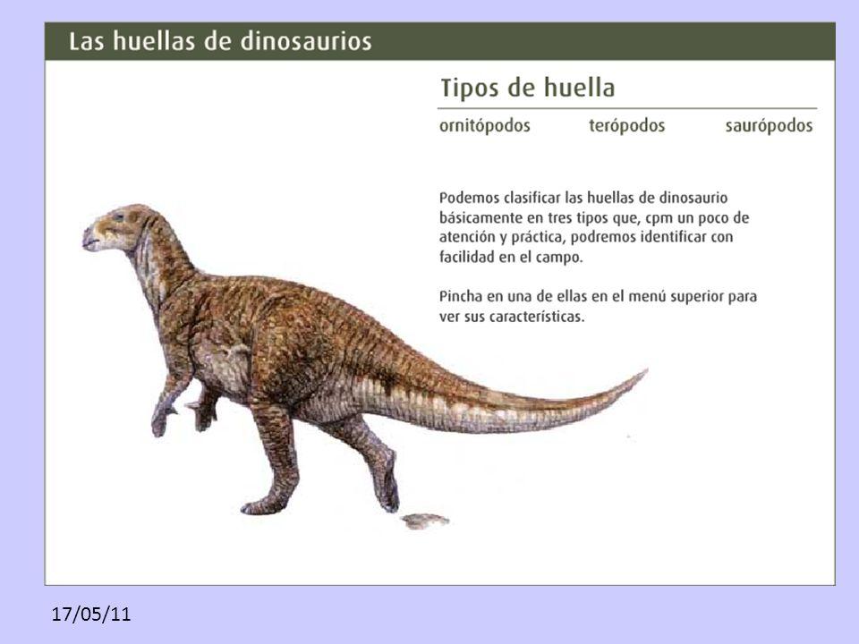 17/05/11 www.lariojaturismo.com/multimedia_contenid os/149_1.tipos_de_huella.fla.swf