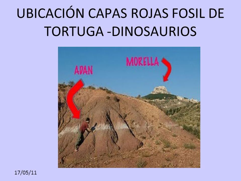17/05/11 UBICACIÓN CAPAS ROJAS FOSIL DE TORTUGA -DINOSAURIOS