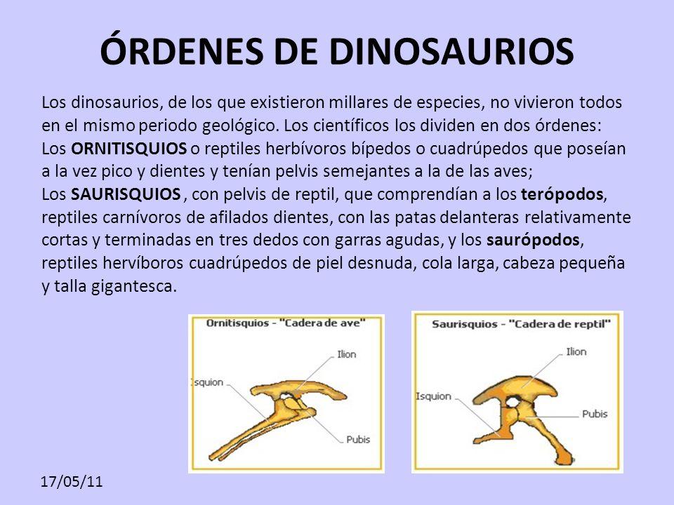17/05/11 ÓRDENES DE DINOSAURIOS Los dinosaurios, de los que existieron millares de especies, no vivieron todos en el mismo periodo geológico. Los cien