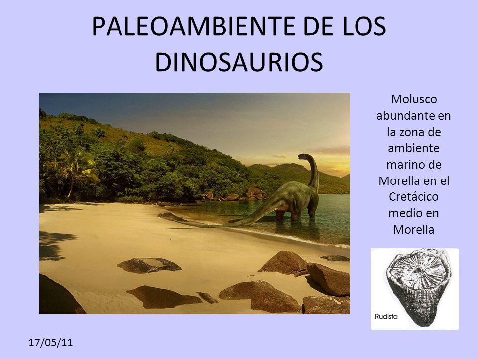 17/05/11 PALEOAMBIENTE DE LOS DINOSAURIOS Molusco abundante en la zona de ambiente marino de Morella en el Cretácico medio en Morella