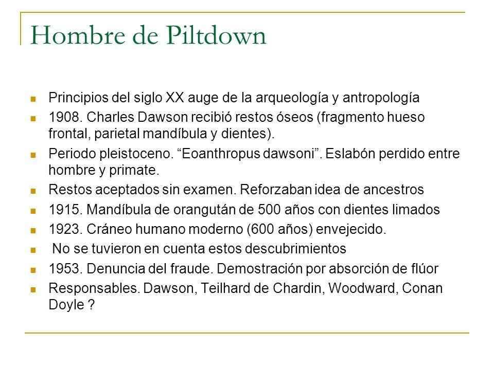 Hombre de Piltdown Principios del siglo XX auge de la arqueología y antropología 1908. Charles Dawson recibió restos óseos (fragmento hueso frontal, p