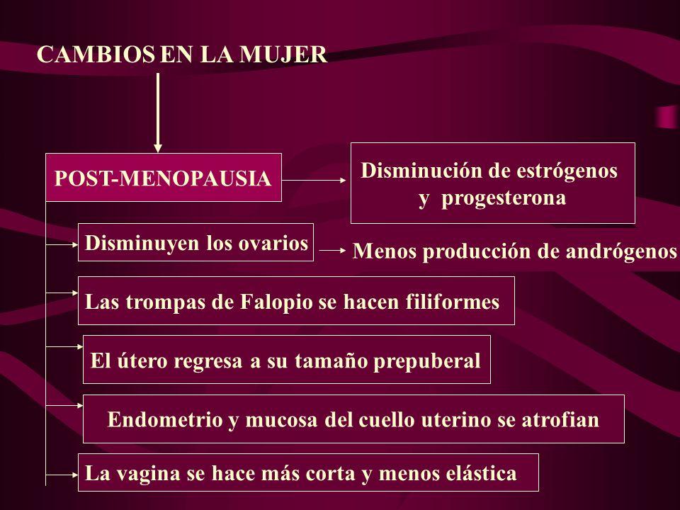 POST-MENOPAUSIA CAMBIOS EN LA MUJER Disminución de estrógenos y progesterona Disminuyen los ovarios Menos producción de andrógenos Las trompas de Falo