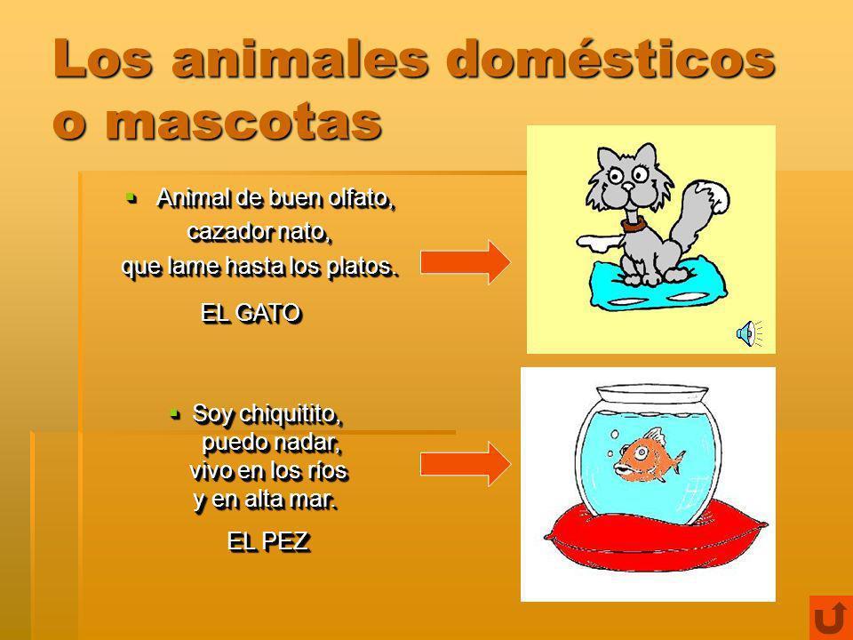 ¡CONOCEMOS LOS ANIMALES.