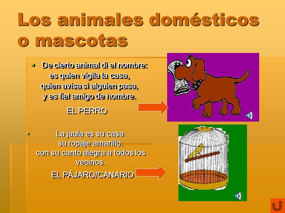 Los animales domésticos o mascotas Animal de buen olfato, Animal de buen olfato, cazador nato, que lame hasta los platos.