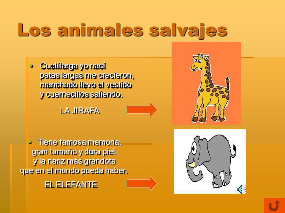 Los animales salvajes El rey de la selva es, El rey de la selva es, célebres melenas tiene, y si aún no sabes cual es, en el circo lo puedes ver.